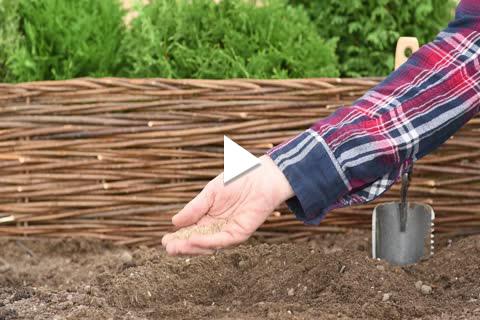 Tomato - Planting Tips