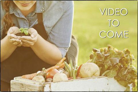 Vegetable Direct Sow - Harvesting