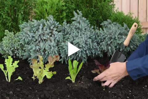 Vegetable Non-Direct Sow - Planting