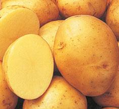 All Purpose potato