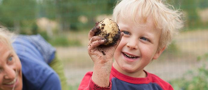 Ready to Grow Your Own Potatos?