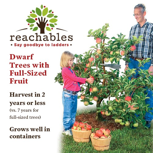 Reachables Tree