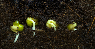 Why didn't my seeds germinate better?