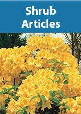 Shrubs Articles