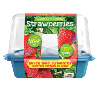 Grow Your Own Strawberries Plant Kit