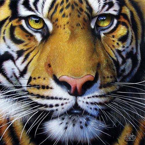 Golden Tiger Face 1000 Piece Jigsaw Puzzle