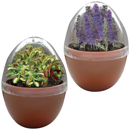 Mini Egg Terrarium Set