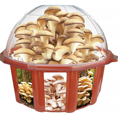 Grow Your Own Oyster Mushrooms
