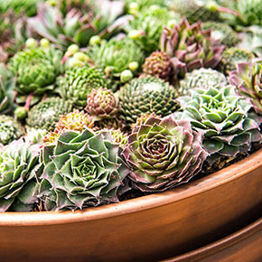 Succulent Planter with Saucer