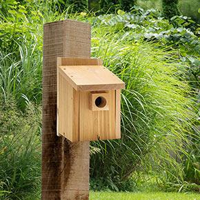 Basic Bluebird House