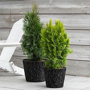 Lodge Look Planter
