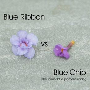 Blue Ribbon Butterfly Bush