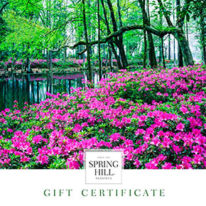 E-Gift Certificate – Landscape Design