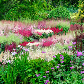 Astounding Astilbe Collection