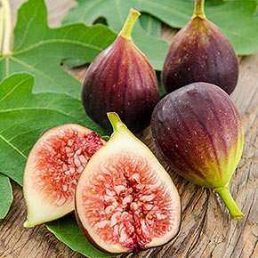 Improved Brown Turkey Fig