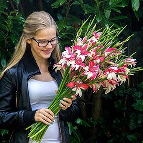 Galaxian Hardy Gladiolus