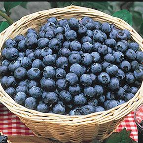 Blueberry Bonus
