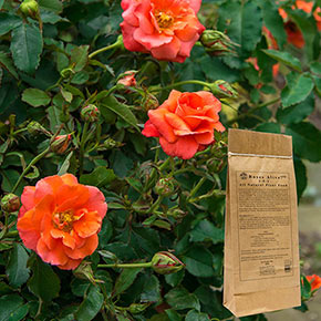 Roses Alive!™
