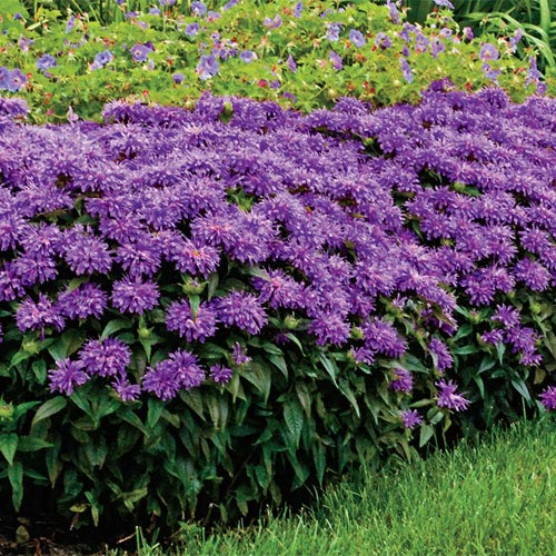 go native  consider native plants for a low maintenance garden