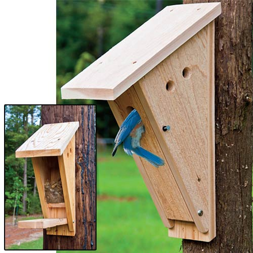 I3 squidoocdn   resize squidoo images  1 draft lens17956131module151131336photo 1309228964blue bird nesting box 2 furthermore Diy Bird Feeders in addition Bluebird Nest Box furthermore Our Cardboard Pirate Ship Ss Home Depot further Bluebird House Gilbertson Pvc Cedar Bird House Also Can Be Used As Chickadee House Wren House Or Swallow Bird House North American Bluebird Society Approved Made In Usa Bluebirds Love It. on pvc bluebird house plans
