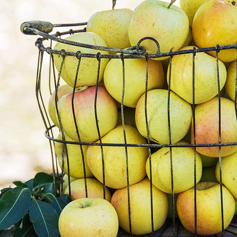 Apple Crunch-A-Bunch™ PPAF REACHABLES<sup>®</sup> 2-4 FT
