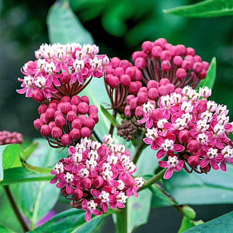 Soulmate Butterfly Flower