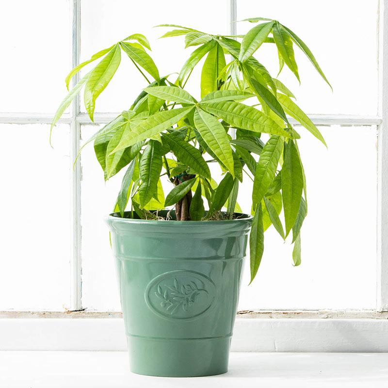 Celadon Planter