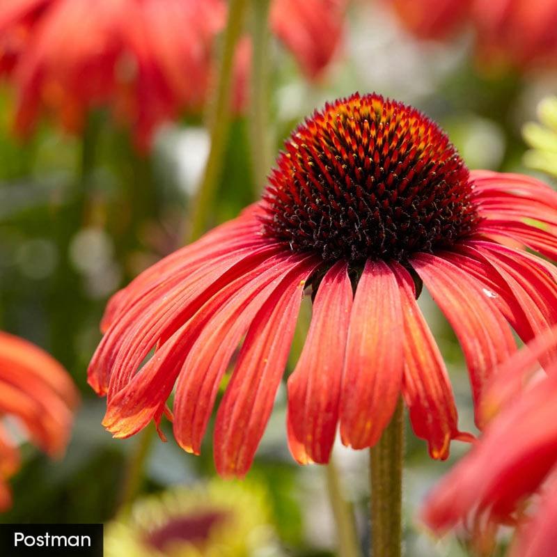 Hot Color Perennial Garden
