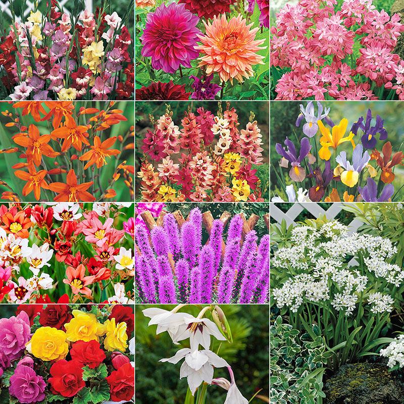 Mighty 200 Summer Bulb Garden