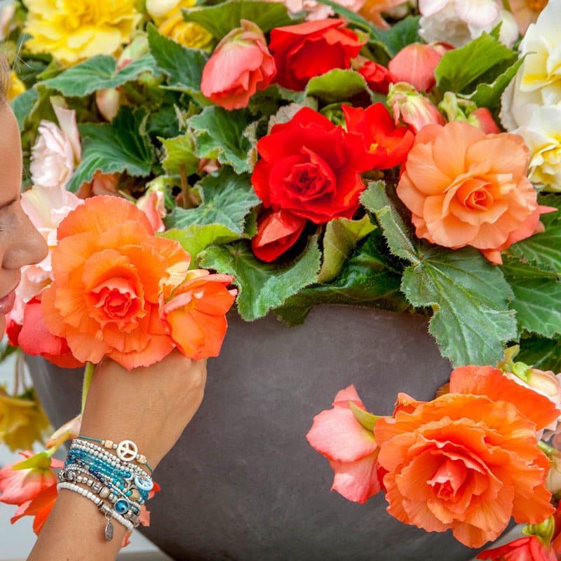 Fragrant Begonia Mix