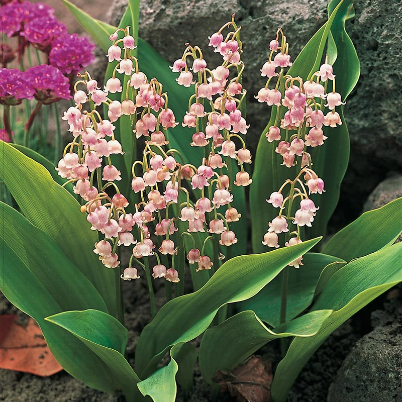 Lily of the Valley Nosegay
