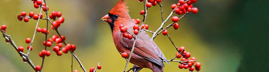Bird Attracting