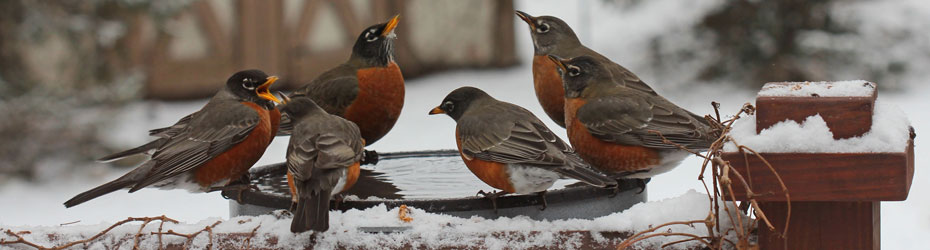 Bird Baths and Water Aids