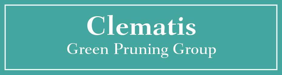 Green Pruning Clematis