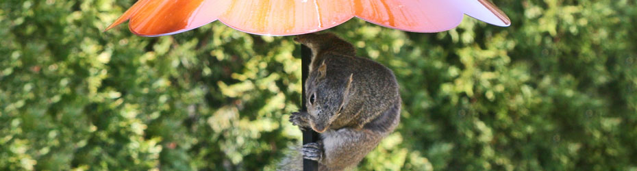 Squirrel Deterrents