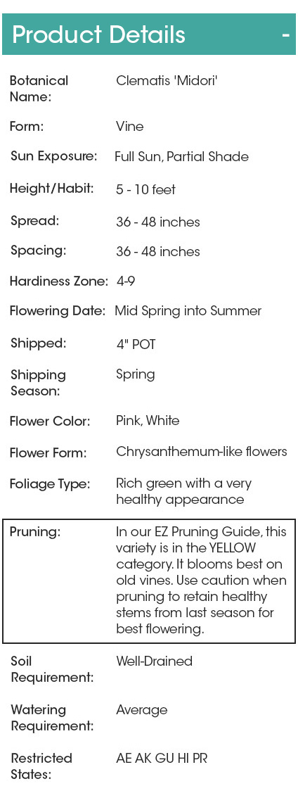 Where to check pruning details