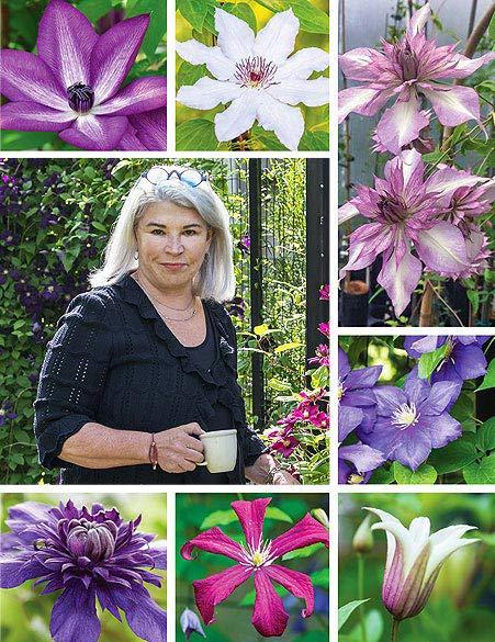 Deborah and Clematis Plants