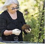 Tips: Proper Planting