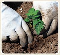 Guides to Gardening