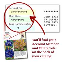 Spring Hill Catalog