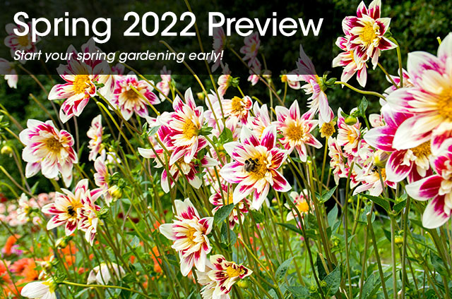 Spring 2022 Preview