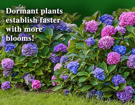 Bloom of Dormant Plants
