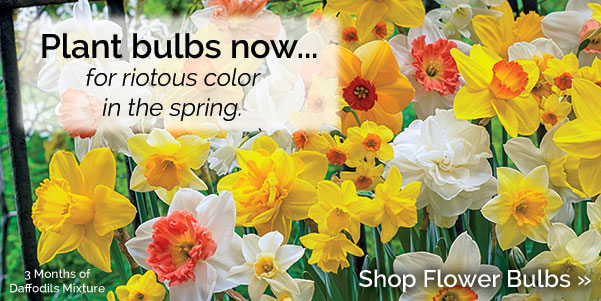 Now's the time to plant your flower bulbs!