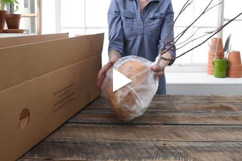 Hydrangea Bareroot - Unboxing