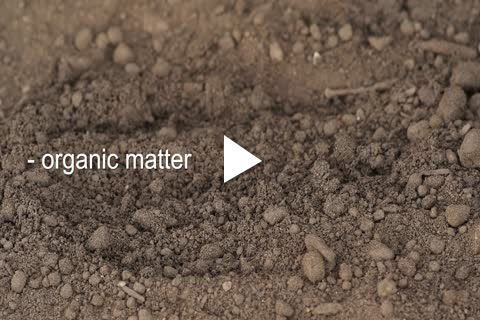 Hydrangea Potted - Soil Amending
