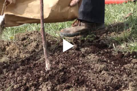 Trees - Fertilizer/Staking/Mulching