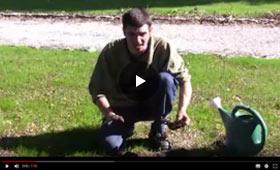 How to Plant Iris