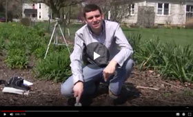 How to Plant Daylilies Video