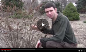 How to Prune Shrubs in Early Spring