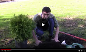 Guide to planting small trees and shrubs